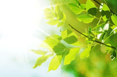 朝の光と姿勢の良さで、意志力をアップ! 【意志力の惑星=太陽】をどう活かす?