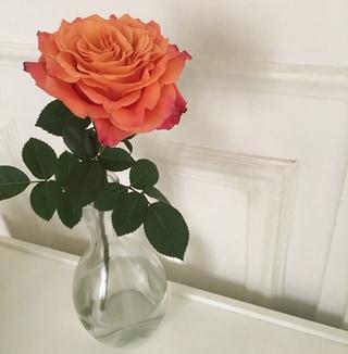 この薔薇は、あなたのために。