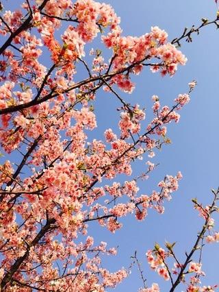 春はすぐそこに!