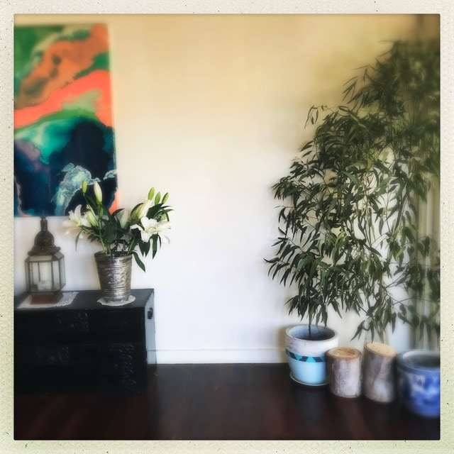 室内 ユーカリ