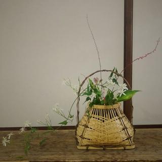 奈良で買った種木で園芸を始めました