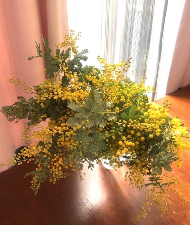 花粉 ミモザ