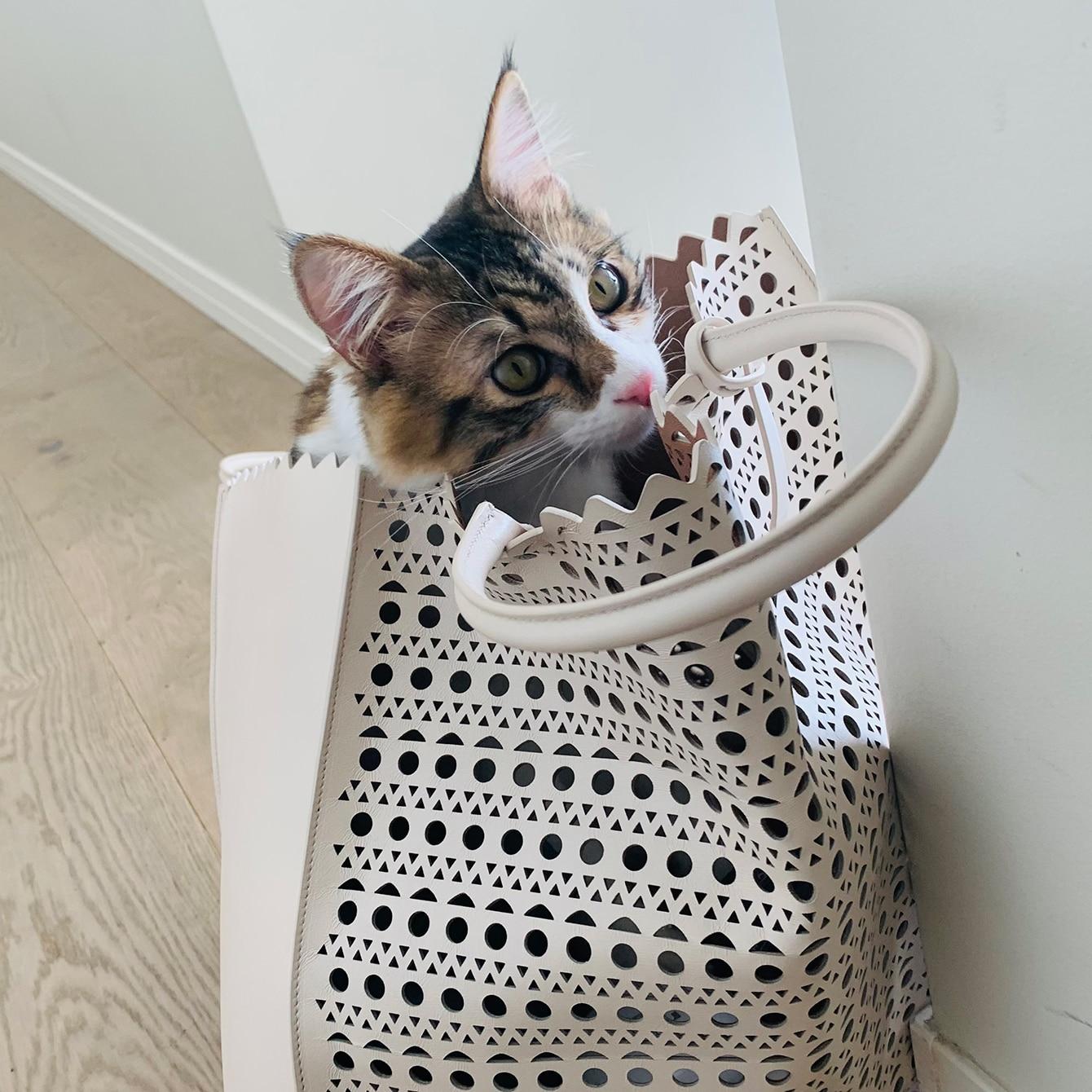 最強のマインドフルネス。猫と一緒の新しい生活
