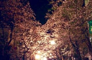 3月31日のブルームーンは、お月見&お花見で強力デトックス!