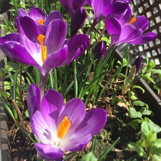 春は必ずやってくる
