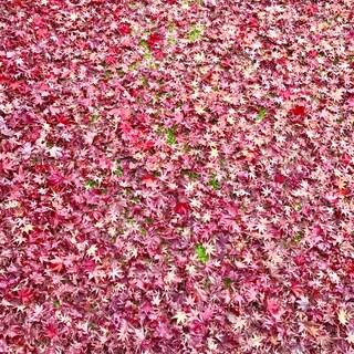 乾燥は運気を落とす!?  秋の養生と暮らしのコツ
