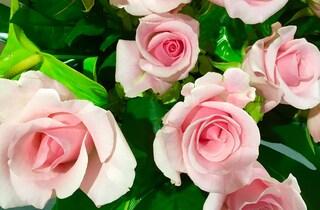 10月20日の新月は、これからの「美しくなる」計画を!