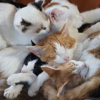 【猫映画の最高峰】中村倫也が猫の家族愛を語る...癒ししかない最新作
